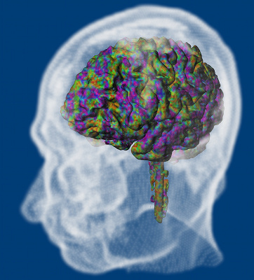 Brain network dynamics's image